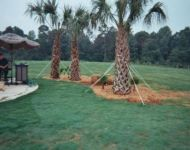ridgewater-palm-trees